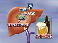 vol.1 飲酒・喫煙と健康