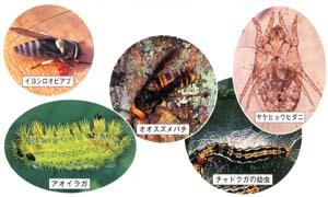 毒をもつ動物画像